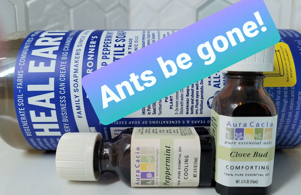 Ants In The Pantry – Ant Control Tips
